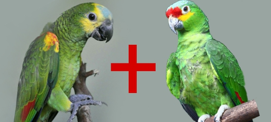 TALKING PARROTS and other exotic animals, monkeys